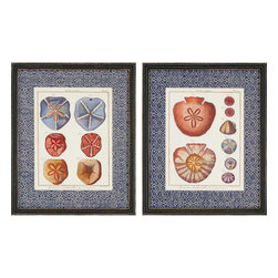 Paragon - Sand Dollars PK/2 - Framed Art - Each product is custom made upon order so there might be small variations from the picture displayed. No two pieces are exactly alike.