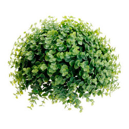 Silk Plants Direct - Silk Plants Direct Eucalyptus Half Ball (Pack of 6) - Silk Plants Direct specializes in manufacturing, design and supply of the most life-like, premium quality artificial plants, trees, flowers, arrangements, topiaries and containers for home, office and commercial use. Our Eucalyptus Half Ball includes the following: