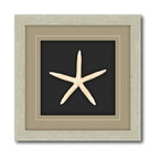 Courtside Market - Shadow Box Frame Double Matte Mounted White Starfish with Driftwood Molding - WE - Shop for Framed Art and Posters from Hayneedle.com! The Shadow Box Framed White Starfish Wall Art - 12W x 12H in. lets you bring a bit of the beach home with you. This shadow box contains a delicate starfish. Its contrasting sand brown frame and black background lets the starfish shine. Scaled just right to be the focal point of a collection of nautical art pieces or on its own. Dimensions: 12W x 12H inches. Proudly made in the USA.