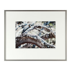 'Ligne de Vie (Life Line), Mendocino' - Let this forest scene give your walls some perspective with its coils of branches extending back across the frame.  This photograph of manzanita boughs, by contemporary artist Gaétan Caron, is a limited edition print that will bring modern tastefulness with a touch of infinity to your wall.