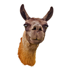 "Walls Need Love - Llama Mount Decal - This curious llama just wants to say, ""Hi."" One look and you'd swear he's smiling back at you, and thankfully with this decal, there's no spitting."