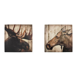 Zeckos - Bull and Cow Moose Pair of Printed Canvas Wall Hangings - This pair of canvases is the perfect addition to rustic decor. One of them features a bull moose, the complementary canvas features a cow moose. They each measure 16 inches tall, 16 inches wide, 3/4 of an inch thick, and easily mount to any wall by the picture hanger on the back. This pair of wall hangings makes a great gift for the wildlife enthusiast, and is sure to be admired.