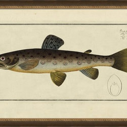 Wendover Art - Speckled Trout - This striking Giclee on Paper print adds subtle style to any space. A beautifully framed piece of art has a huge impact on a room for relatively low cost! Many designers and home owners select art first and plan decor around it or you can add artwork to your space as a finishing touch. This spectacular print really draws your eye and can create a focal point over a piece of furniture or above a mantel. In a large room or on a large wall, combine multiple works of art to in the same style or color range to create a cohesive and stylish space!