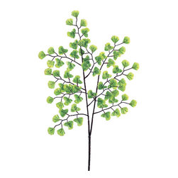 Silk Plants Direct - Silk Plants Direct Maidenhair Fern (Pack of 12) - Pack of 12. Silk Plants Direct specializes in manufacturing, design and supply of the most life-like, premium quality artificial plants, trees, flowers, arrangements, topiaries and containers for home, office and commercial use. Our Maidenhair Fern includes the following: