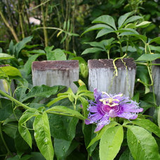 5 Colorful Flowering Vines for the Tropics