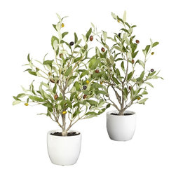 Nearly Natural - 18 in. Olive Silk Tree w Vase - Set of 2 - You will be tempted to pull off an olive. Admired for it's long green leaves. Simple and elegant. Construction Material: Polyester material, plastic, Iron. 10 in. W x 10 in. D x 18 in. H ( 2 lbs. ). Pot Size: 4 in. W x 3.5 in.HThis mini Olive tree looks so real, you're tempted to pull off an olive and pop it into your mouth. Hailing from the Mediterranean Basin, Mini Olive Trees are admired for the long green leaves intermingled with colorful olives throughout the branches. Standing at 18 inches high, in a white vase with faux soil, you'll admire this simple and elegant plant no matter the location.