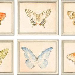 Paragon Decor - Butterflies Set of 6 Artwork - Gossamer butterflies are framed in classic silver wood.