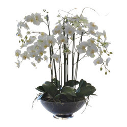 Phalaenopsis Orchid In Glass Container