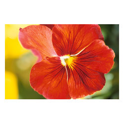 Custom Photo Factory - Multi-Colored Flower Blossom Canvas Wall Art - Multi-Colored Flower Blossom  Size: 20 Inches x 30 Inches . Ready to Hang on 1.5 Inch Thick Wooden Frame. 30 Day Money Back Guarantee. Made in America-Los Angeles, CA. High Quality, Archival Museum Grade Canvas. Will last 150 Plus Years Without Fading. High quality canvas art print using archival inks and museum grade canvas. Archival quality canvas print will last over 150 years without fading. Canvas reproduction comes in different sizes. Gallery-wrapped style: the entire print is wrapped around 1.5 inch thick wooden frame. We use the highest quality pine wood available. By purchasing this canvas art photo, you agree it's for personal use only and it's not for republication, re-transmission, reproduction or other use.