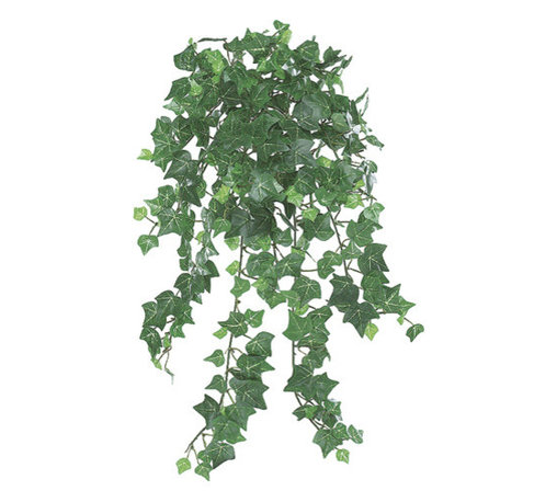 Silk Plants Direct - Silk Plants Direct English Ivy Vine Hanging Plant (Pack of 12) - Pack of 12. Silk Plants Direct specializes in manufacturing, design and supply of the most life-like, premium quality artificial plants, trees, flowers, arrangements, topiaries and containers for home, office and commercial use. Our English Ivy Vine Hanging Plant includes the following:
