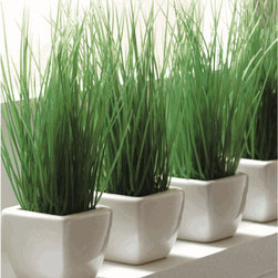 Potted Wheat Grass - If you do miss seeing some green around the house, these potted wheat grass plants are just right. They're healthy, easy and provide a beautiful shock of color.