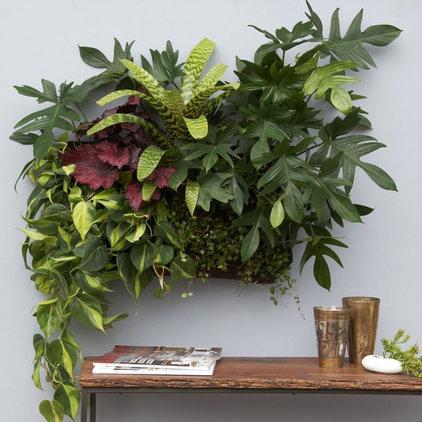 Contemporary Outdoor Planters by Flora Grubb Gardens