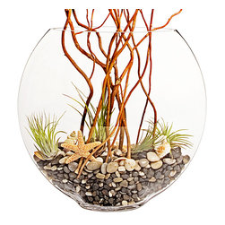 """luludi living frames - Luludi Living Frames Wafer - Our wafter thin glass bowl is filled with air plants and a collection of small polished stones, decorative sea shells and branches. Its simple breezy design creates an easy care accent piece for any room in the house or office, available as shown or may be custom-tailored:, dimensions: 14"""" width x 15"""" height x 5"""" depth, weight (approx): 2 lbs, terrariums are unique landscapes so finished pieces may vary, Suggestion for care:, no direct sun required, mist once per week remove air plant first, mist and allow to dry before replacing in terrarium, upon receipt soak air plant in bowl of water for 30 minutes, allow to dry then place plant in terrarium"""