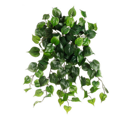 Silk Plants Direct - Silk Plants Direct Philodendron Vine Hanging Plant (Pack of 36) - Silk Plants Direct specializes in manufacturing, design and supply of the most life-like, premium quality artificial plants, trees, flowers, arrangements, topiaries and containers for home, office and commercial use. Our Philodendron Vine Hanging Plant includes the following: