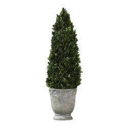 Uttermost - Boxwood Cone Topiary - Preserved, natural evergreen foliage potted in a light stone finished, ceramic planter.