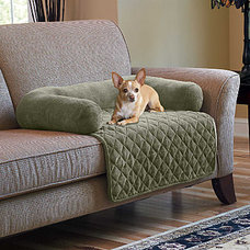 Contemporary Pet Supplies by Improvements Catalog