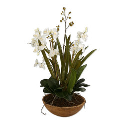 Uttermost - Moth Orchid Planter - Hand painted, natural brown dish garden of white moth orchids planted in permanent soil with mixed foliages from the orchid family.