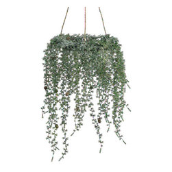 Silk Plants Direct - Silk Plants Direct Glittered Pine and Cone Hanging Wreath (Pack of 2) - Pack of 2. Silk Plants Direct specializes in manufacturing, design and supply of the most life-like, premium quality artificial plants, trees, flowers, arrangements, topiaries and containers for home, office and commercial use. Our Glittered Pine and Cone Hanging Wreath includes the following: