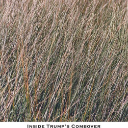 Inside Trump'S Combover, Limited Edition, Photograph - The Donald: too close and personal