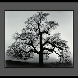 """Amanti Art - """"Oak Tree, Sunset City, California, 1962"""" Framed Print by Ansel Adams - Let your eyes wander over this classic Ansel Adams print of an oak tree, branches at once stark and rich with detail. Taken in Sunset City, California, this black-and-white print will look great anywhere in your home."""