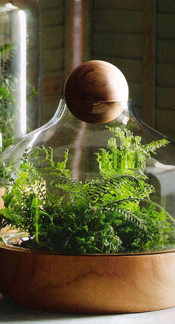 Small Danish Terrarium - My husband loves plants. This is the perfect kitchen vase.