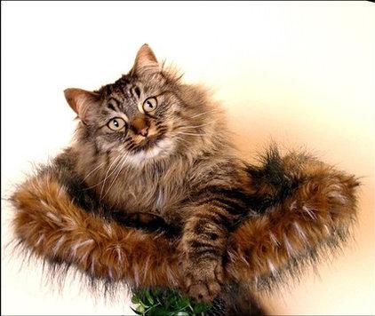 Etsy Designer - Incredible Cat