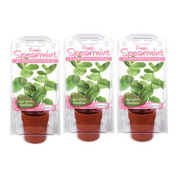DuneCraft - Spearmint Terranium Herb Growing Kit - Set of Three - This windowsill herb kit brings the joy of gardening into the kitchen. A great way to teach burgeoning little ones about planting, it's a fun and delicious way to have fresh herbs year-round. �� Includes three sets of spearmint seeds, sprouting pot, sprouting terrarium, germination medium, instructions and information 3.4'' W x 2.9'' H x 8'' D Plastic / plant seeds Made in the USA