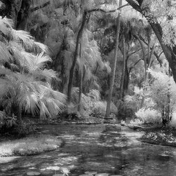 Lily Pond - Black & White Photography Limited Edition Print - Tropical setting in South Florida.