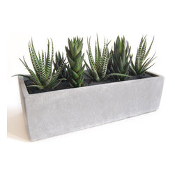 LushModern - Cactus Garden // Cement Planter - Spiky or striped, the cacti that make up this little succulent garden are memorable yet low maintenance. This fun, DYI botanical kit includes one white-washed cement planter, three zebra cacti, four haworthia cacti, a small bag of gravel, potting soil, black sand and a finishing brush.