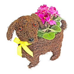 "luludi living frames - Luludi Living Frames Pitter Patter, Small - Our pitter patter puppy planter comes with a charming display of pre-planted kalanchoes or violets with moss and a decorative bow. Made of rich chocolate woven rattan, this adorable living frame pup makes a wonderfully unique pet lover and housewarming gift, puppy planter comes in two sizes pre-filled with kalanchoes or violets (may be custom filled upon request):, small, dimensions: 8"" length x 7"" height x 5"" depth, weight (approx): 10 oz, medium, dimensions: 15"" length x 12"" height x 5. 5"" depth, weight (approx): 10 oz, want to create your own puppy display?, visit our plants section to custom fill your purse with a different plant of your choice, just contact us"