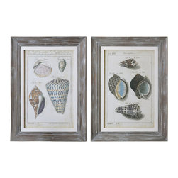 Grace Feyock - Grace Feyock Vintage Shell Study Framed Wall Art X-23514 - Prints are surrounded by wooden frames featuring an allover gray wash with light and medium gray distressing accented by off-white linen liners. Prints are under glass.