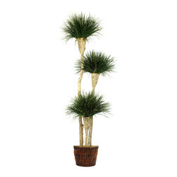 Dalmarko Designs - Preserved Onion Grasses on Ocotillo Tree - This exclusive tree is completely grown in California and handcrafted by our artisans with over 30 years of experience. Shown as is 6.5' x 3 Blooms in basket.