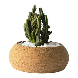 Melanie Abrantes Designs - Medium Cork Planter - Hand-turned cork planters designed for desert plants such as succulents and cacti. Cork is naturally porous making it an ideal material for plants. Each planter has a shellacked interior and finished on the outside with a natural beeswax. Due to the nature of the material each planter and unique and one-of-a-kind. Color and size might vary.