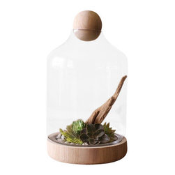 Silver Nest - Glass Terrarium with Wood Top- Large - Large Glass Terrarium with Wood base and Wooden Ball Top