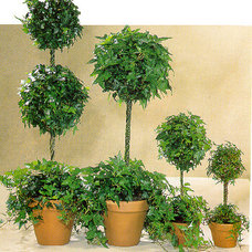 Modern Plants by Donalea Plant Brokers