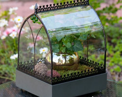H. Potter - H. Potter Old World Wardian Case Terrarium - WAR142 - Shop for Greenhouses from Hayneedle.com! Displaying simplicity and elegance at its best the H. Potter Old World Wardian Case Terrarium is a wonderful accent piece. An old world flair and charm is reflected in its design. This terrarium has a metal frame and lattice with curved glass sides and green jewel accents. The splash of color inside the terrarium further enhances its visual appeal. Infusing a touch of nature into your ambience this terrarium is sure to be a nature lover's favorite home accent. About H. Potter ProductsOver the past nine years H. Potter has continually enhanced all aspects of their business to fill the desires of their growing list of satisfied customers. With the entrance of 2006 they were able to offer over 100 impressive designs. Not only are they always striving to bring you products that are new bold and unique but they also work hard to increase the overall quality of the items. They do this by incorporating heavier materials stainless steel hardware and dramatically expanding their copper container business. H. Potter artisans design many 100% hand-made pieces to fit effortlessly into your home or garden setting.