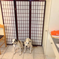 Room Dividers, Folding Screens, Partitions, Decorative Screens, Room Separators - A customer uses our 3 panel shoji screen in 5ft to create a barrier wall so the dogs do not go into the living room when nobody is home.  A very cost effective solution.