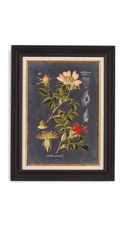 Bassett Mirror - Bassett Mirror Framed Under Glass Art, Midnight Botanical I - Midnight Botanical I