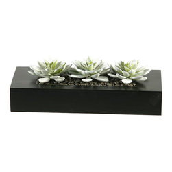 D&W Silks - D&W Silks Snow Look Echeveria Succulents in Black Wooden Planter - Three snow-look Echeveria plants are set in a black square box to create a very modern piece for any ledge or table. This piece comes assembled as seen pictured, with no watering or sunlight necessary to maintain original color and shape.