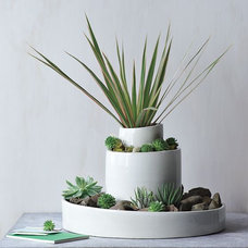 Modern Indoor Pots And Planters by West Elm