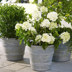 Basile Planters - These planters are the perfect size for a kitchen herb garden.