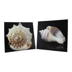 Zeckos - Pair of Seashell Printed Canvas Wall Hangings - This pair of printed canvases features 2 macro views of the natural beauty of seashells. The shells are pale in color with variegations, on a dark background for contrast to bring out the details. They measure 11 inches tall, 11 inches wide, 1 inch thick and they easily mount to the wall with a single nail or screw. They make a lovely addition to rooms, bars, and restaurants with beach or nautical decor.