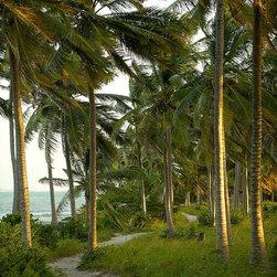 Magic Murals - Matemo Island Palm Trees Wallpaper Wall Mural - Self-Adhesive - Multiple Sizes - - Matemo Island Palm Trees Wall Mural