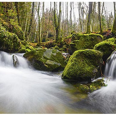 Magic Murals - Lush Stream and Falls Panorama Wall Mural -- Self-Adhesive Wallpaper by MagicMur - Luscious greenery surrounds this Tuscan stream and water falls in this time lapsed panoramic image taken of a wooded sanctuary.