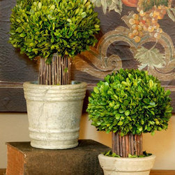 Small Hedged Boxwood Topiary - Another variation of topiaries.