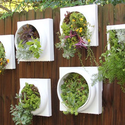 """Living Walls - These living walls are upcycled from an elegant column bases. Makes a eye catching statement wherever you may hang. Mounted with a solid waterproof backing and industrial picture wire. Each living wall is unique & planting may vary slightly from the one pictured above yet will be just as thick, lush & elegant. Many sizes are available measuring from 8x8 - 16x16. Each living wall comes pre planted with a fully rooted, mature & lush mat of sedums & succulents. ( also available in shade mix, indoor mix, ferns mix, & ivy mix. Unlike other sellers there is no """"waiting period"""" on my living walls, they come fully rooted & ready to hang. Makes a picture perfect present. Free gift wrapping is available upon request."""