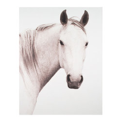Kathy Kuo Home - Hyden Rustic Lodge Modern Solo Horse Photo Wall Art - Unframed - With stark beauty and pure presence, this equine portrait will really stand out on your wall. This white horse could be the one that gallops in to save your decor! This stunning shot is available framed or unframed.