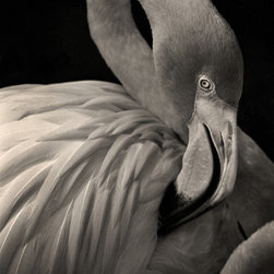The Andy Moine Company LLC - Flamingo in Florida Pink Feathers Fine Art Black and White Photography , 16x24, - Black and White Fine Art Photography captured with 35MM Ilford Film and reproduced in Limited Editions on Canvas OR Brushed Aluminum. This is a beautiful composition of a Flamingo relaxing on a warm Summer Afternoon in Florida. A Perfect gift for the bird watcher or animal lover in your life.