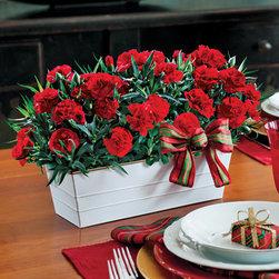 Festive Carnations Planter -