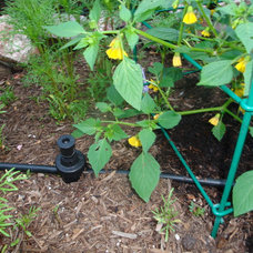 The Basics of Watering by Hand
